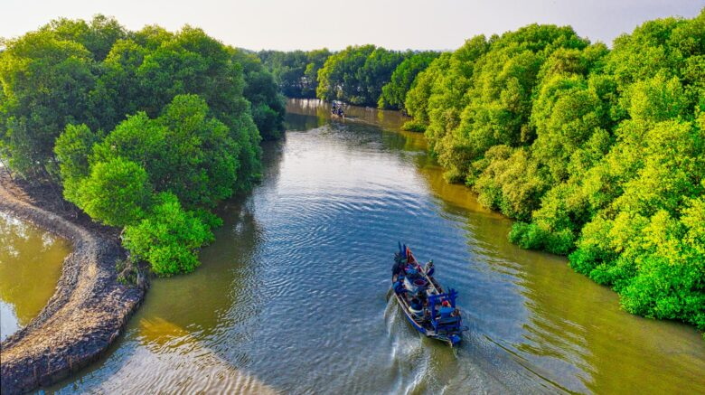 image of a boat in between mangroves